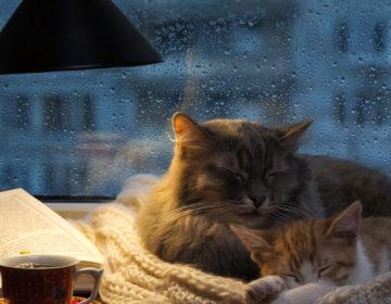Как избавится от осенней сонливости